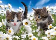 Kittens and Daisies (RB10612-7), a 100 piece Ravensburger jigsaw puzzle.