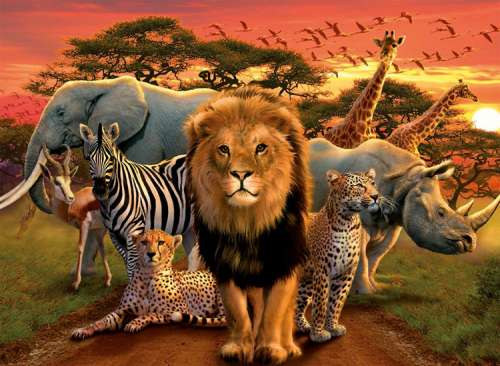 African Splendor (RB14177-7), a 500 piece jigsaw puzzle by Ravensburger. Click to view larger image.
