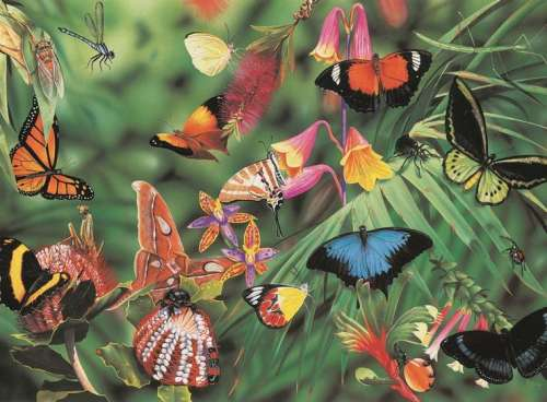Butterflies (Wild Australia Educational Series) (BL01874), a 300 piece jigsaw puzzle by Blue Opal. Click to view larger image.