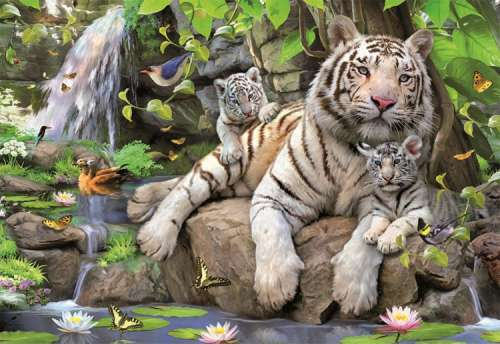 White Tigers of Bengal (EDU14808), a 1000 piece jigsaw puzzle by Educa. Click to view larger image.