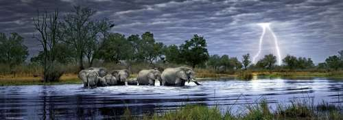 Herd of Elephants (HEY29508), a 2000 piece jigsaw puzzle by HEYE. Click to view larger image.