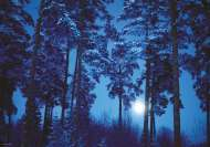 Full Moon (Magic Forests) (HEY29625), a 500 piece HEYE jigsaw puzzle.