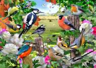 Birds for All Seasons (JUM11025), a 1000 piece jigsaw puzzle by Jumbo. Click to view this jigsaw puzzle.