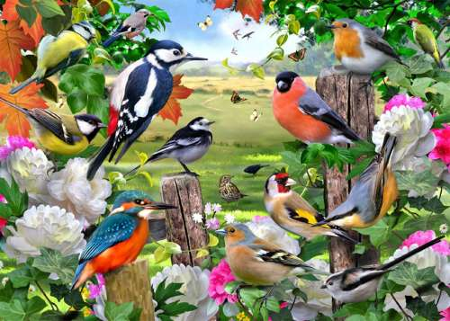 Birds for All Seasons (JUM11025), a 1000 piece jigsaw puzzle by Jumbo. Click to view larger image.