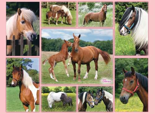 Horse Heaven (RB13174-7), a 300 piece jigsaw puzzle by Ravensburger. Click to view larger image.