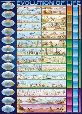 Evolution of Life (EUR60080), a 1000 piece jigsaw puzzle by Eurographics. Click to view larger image.