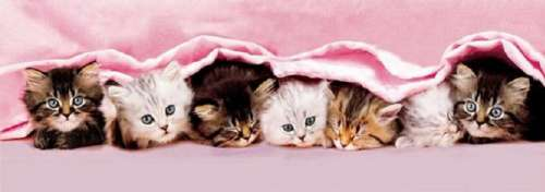 Kittens Under the Blanket (Panorama) (CLE 39127), a 1000 piece jigsaw puzzle by Clementoni. Click to view larger image.