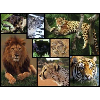 Big Cats (WWF083), a 1000 piece jigsaw puzzle by WWF. Click to view larger image.