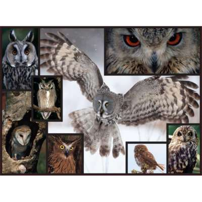 Owls (WWF081), a 1000 piece jigsaw puzzle by WWF. Click to view larger image.