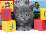 Gray Kitten (RB13908-8), a 200 piece Ravensburger jigsaw puzzle.