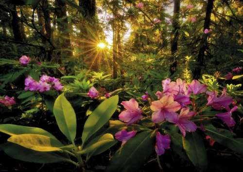 Rhododendron (Magic Forests) (HEY29662), a 2000 piece jigsaw puzzle by HEYE. Click to view larger image.