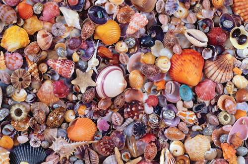 Sea Shells (PIA566349), a 1000 piece jigsaw puzzle by Piatnik. Click to view larger image.