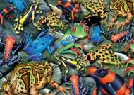Rainforest Frogs (PIA555244), a 1000 piece Piatnik jigsaw puzzle.