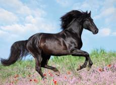 Beautiful Horse (RB12803-7), a 200 piece Ravensburger jigsaw puzzle.