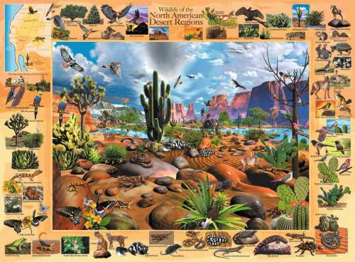 Desert Life (RB13192-1), a 300 piece jigsaw puzzle by Ravensburger. Click to view larger image.