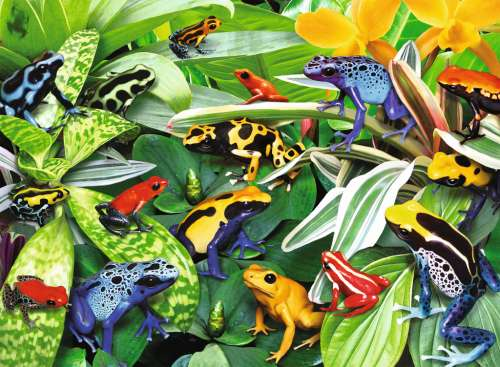 Friendly Frogs (RB13018-4), a 300 piece jigsaw puzzle by Ravensburger. Click to view larger image.