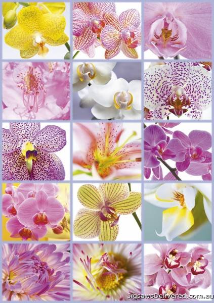 Collage of Flowers (EDU16302), a 1500 piece jigsaw puzzle by Educa.