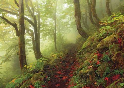 Path (Magic Forests) (HEY29519), a 1000 piece jigsaw puzzle by HEYE. Click to view larger image.