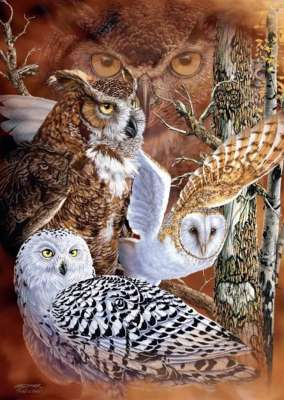Find the Owls (JUM18346), a 500 piece jigsaw puzzle by Jumbo. Click to view larger image.