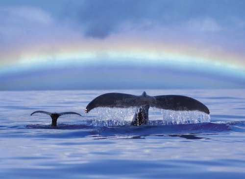Blue Horizons (Whale) (RB14664-2), a 500 piece jigsaw puzzle by Ravensburger. Click to view larger image.