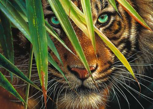 Mysterious Tiger (RB19486-5), a 1000 piece jigsaw puzzle by Ravensburger. Click to view larger image.