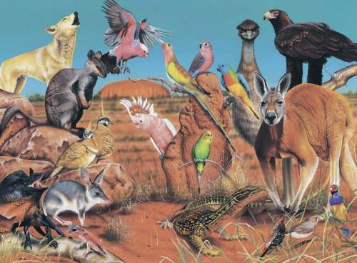 Outback (Wild Australia Educational Series) (BL01977), a 100 piece jigsaw puzzle by Blue Opal. Click to view larger image.