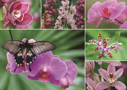 Dutch Orchids (JUM18354), a 1000 piece jigsaw puzzle by Jumbo. Click to view larger image.