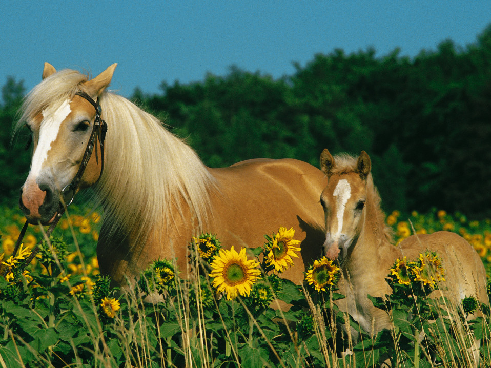 Horse Happiness Jigsaw By Ravensburger 12628 6 200